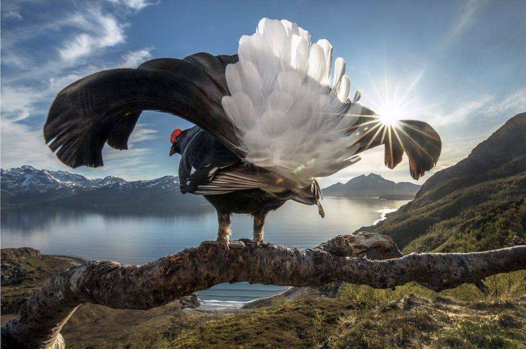 Incredible Winners of the BigPicture Natural World Photography Competition