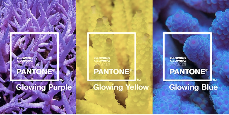 Pantone Unveils Three New Color Tones Based on How Coral React to Climate Change